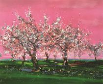 Vergers en fleurs au ciel rose