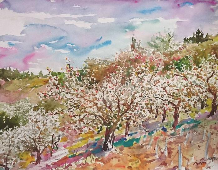 Vue sur les cerisiers  à Irancy