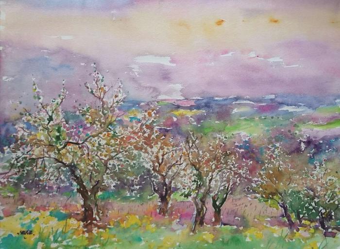 Lumières sur les cerisiers Irancy